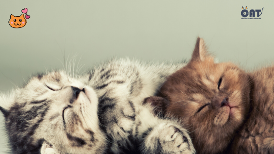 Kalifornijski ljubitelj životinja pretvorio je svoju kuću u raj za mačke (VIDEO)