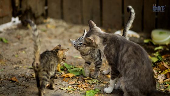 Za svaku pohvalu: Jerusalim će nahraniti sve ulične mačke