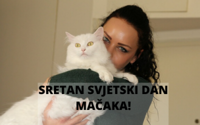 """Da li ste znali da se 17. februar slavi kao """"Svjetski dan mačaka""""?"""