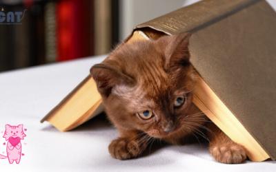 Ugodno s korisnim: Mačići se slobodno kreću u knjižari u Kanadi, kupci ih mogu čak i usvojiti (FOTO)