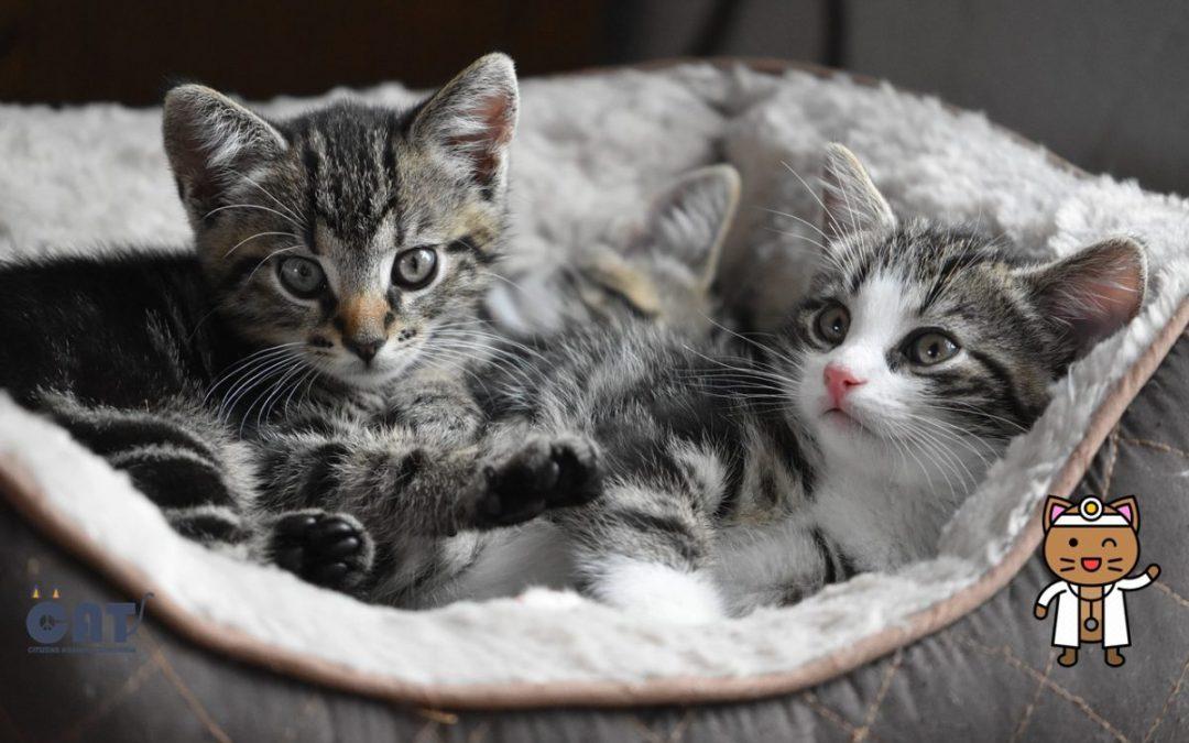 One su lijek za dušu i tijelo: Imati mačku ne samo da je zabavno, nego je i zdravo!