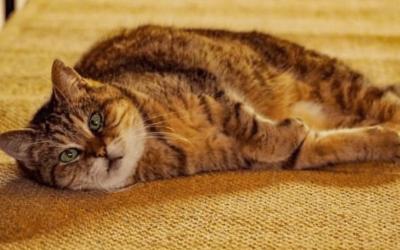 Upoznajte Gli, mačku kojoj je Aja Sofija dom skoro 16 godina (FOTO)