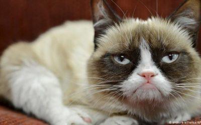 Mačke: kraljice praznovjerja i – klikova