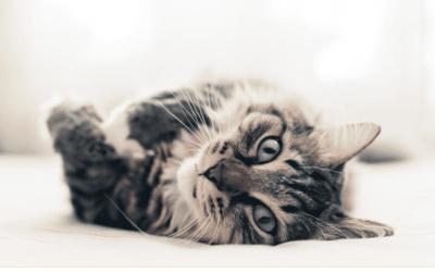 """Šta ti govori tvoja mačka: 10 """"mijau"""" koji imaju potpuno različito značenje"""