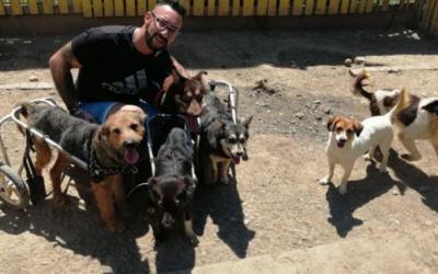 MOMAK ZLATNOG SRCA- Jovica je svoj dom pretvorio u utočište za 50 pasa sa invaliditetom