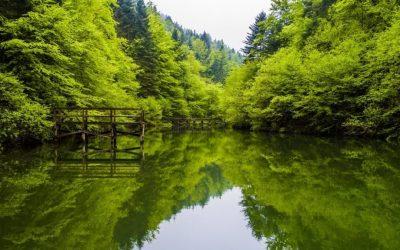 """LJEPOTE BOSNE I HERCEGOVINE KOJE SE MORAJU POSJETITI: Park prirode """"Tajan"""" (VIDEO/FOTO)"""