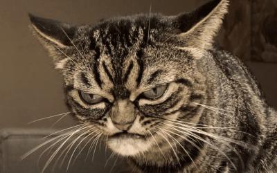 UVIJEK JE LJUTA- Upoznajte Kitziju, mrzovoljnu mačku koja ima preko 44,9 hiljada pratilaca na Instagramu